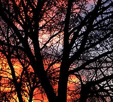 Tree And Setting Sun by digitalmidge