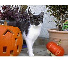 Halloween Holly  Photographic Print