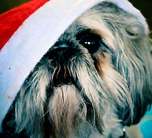 Lola plays Santa by Pat Shawyer
