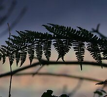 Fern at sunset - Co Cork, Ireland by Pamela Baker