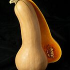 Butternut Squash by Ilva Beretta