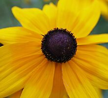 Yellow daisy on the brink by Beninmanc