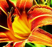 Last Summer's Day Lily (2009) by trueblvr