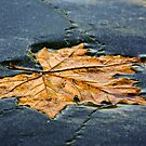 Leaf on ice by Julien Tordjman