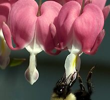my bleeding heart by KathleenRinker