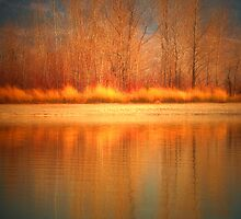 Reflections on Fire by Tara  Turner