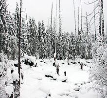 Winter in Mt. Rainer National Park by Julia Washburn