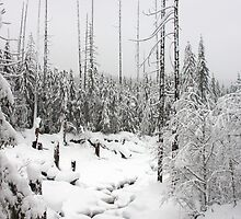 Mt. Rainer National Park in the Winter by Julia Washburn