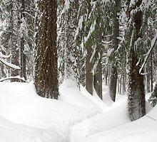 Winter Wonderland by Julia Washburn