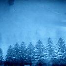 sad pines by Soxy Fleming