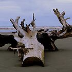 Driftwood on the Beach by BlueFeather
