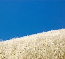 Wind by David Roos