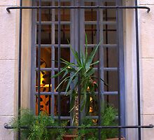 Window in Avignon by Laurel Talabere