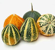 variety of the  decorative pumpkins by robertpatrick