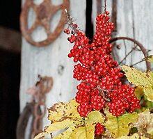 Crow Creek Berries by Rich Summers
