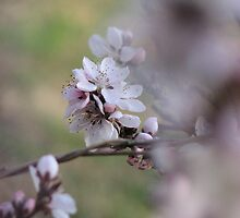 Padio Peach Blossoms by JeffeeArt4u
