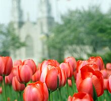 Ottawa Tulips Fes. by heyhodesign