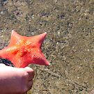 Starring the star fish by jayant