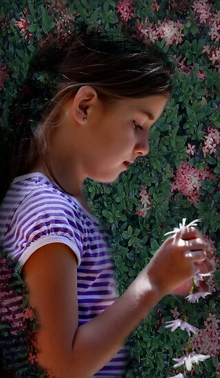The Daisy Chain by Tainia Finlay
