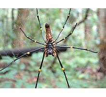 Orbweaver spiders at Territory Wildlife Park Photographic Print