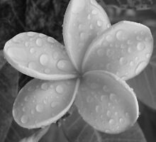 Whispery Drops-(B&W) by Martice