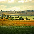 The Darling Downs by Kym Howard