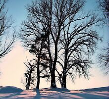 Winter trees on twilight blue sky background by robertpatrick