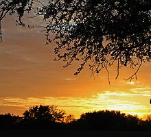 A Tree Silhouettes a Late Evening Sunset by DMHImages