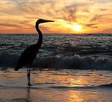 Sanibel Sunset by noffi