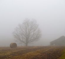 Field Fog by marchello
