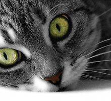 Green eyed cat by BubbleArt