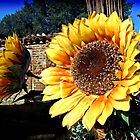 A couple of sunflowers in a courtyard by Warp9