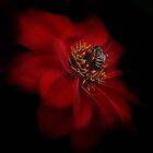 Bee Flower by StuartGLoch