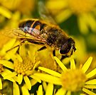This damn pollen gets everywhere! by inkedsandra