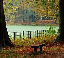 There were only leaves on this bench by jchanders