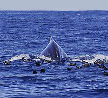 Humpback Sea Monster :: Eden by Clinton Hadenham