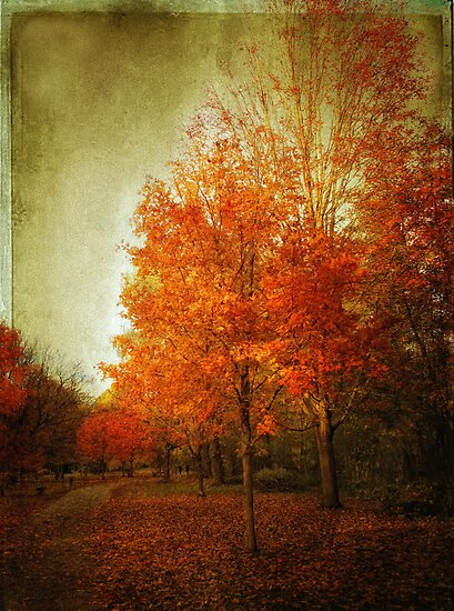 Autumn Aglow by Jessica Jenney