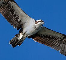 Aerial surveillance by Karen  Moore