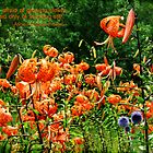 Field Of Lilies Card #5 by L J Fraser