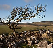 Malham Moor Tree by SteveMG