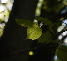 new leaf by donh62