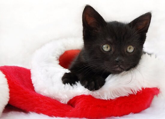 black kitten in a santa hat by sarahnewton