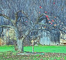 Old Apple Tree by Gotcha  Photography