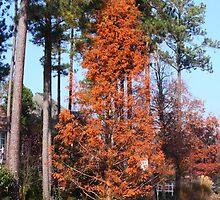Along The Lake North Carolina by Jonathan  Green