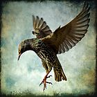 Textured Starling Ballet by igotmeacanon