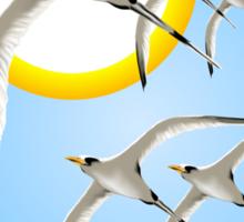 Framed Five Tropic Birds and Sun  Sticker