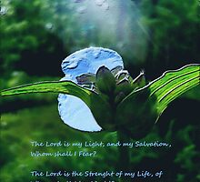 Psalms 27:1 by NatureGreeting Cards ©ccwri
