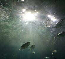 Fishy-ness - Melbourne Aquarium - VIC by Heidi Foreman