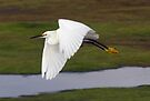 Snowy Egret by Michael  Moss
