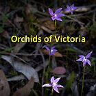 Orchids of North-East Victoria by Paul Piko